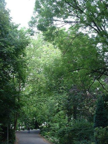 Platane à feuille d'érable – Watermael-Boitsfort, Avenue Emile Van Becelaere, 26 –  25 Juillet 2002