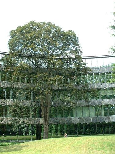 Erable sycomore – Watermael-Boitsfort, Chaussée de La Hulpe, 166 –  26 Juillet 2002