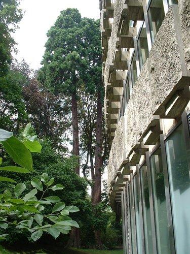 Sequoia géant – Watermael-Boitsfort, Ancien siège de Glaverbel, Chaussée de La Hulpe, 166 –  26 Juillet 2002