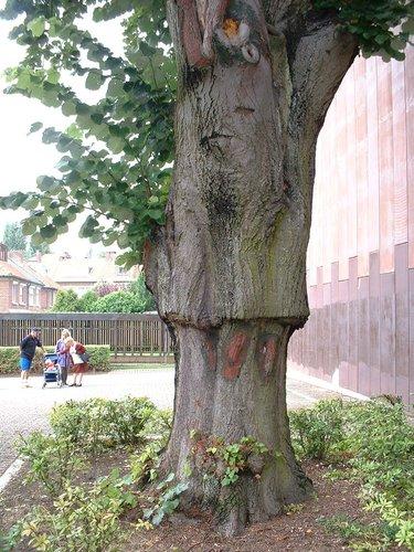 Tilleul argenté – Watermael-Boitsfort, Rue de la Bergerette –  07 Août 2002