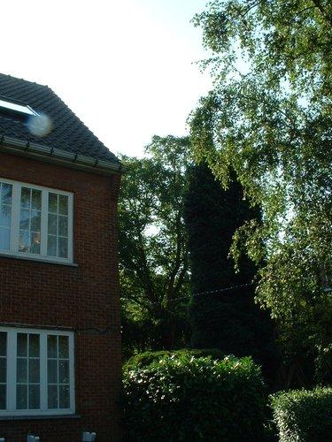 Noyer royal – Woluwé-Saint-Lambert, Avenue Edgard Tytgat, 14 –  14 Août 2002