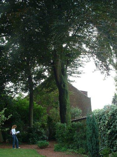 Rode beuk – St.- Pieters - Woluwe, Sint-Michielskollegestraat, 40 –  22 August 2002
