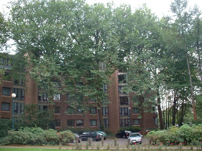 Platane à feuille d'érable – Woluwé-Saint-Pierre, Rue au Bois, 382 –  02 Octobre 2002