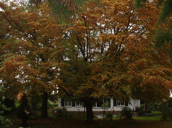 Charme commun – Woluwé-Saint-Pierre, Avenue de l'Escrime, 65 –  18 Octobre 2002