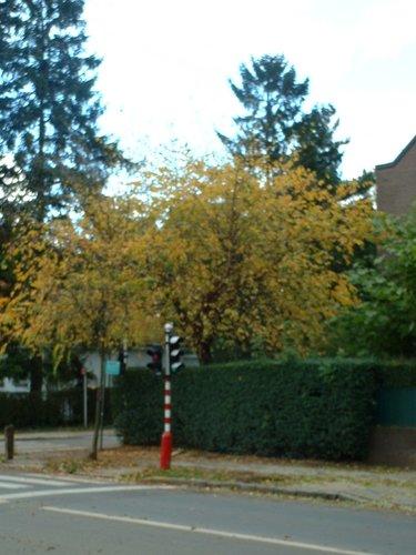 Bouleau noir – Woluwé-Saint-Pierre, Avenue Grandchamp, 115 –  23 Octobre 2002