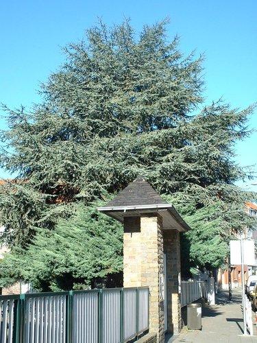 Blauwe ceder – St.- Pieters - Woluwe, Félix De Keusterstraat, 60 –  24 Oktober 2002