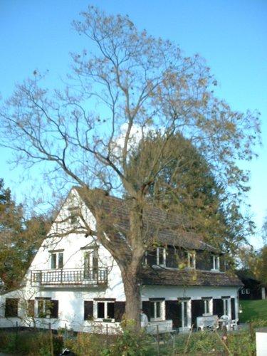Catalpa commun – Woluwé-Saint-Pierre, Val des Perdreaux, 1 –  28 Octobre 2002