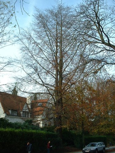 Beuk – St.- Pieters - Woluwe, Tervurenlaan, 429 –  06 November 2002