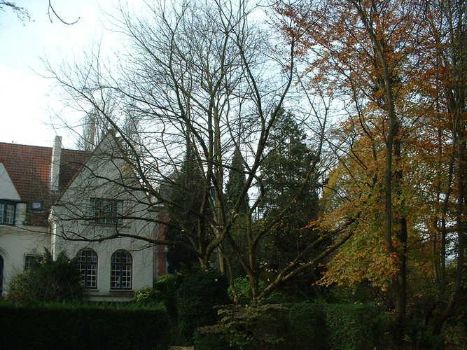 Erable à feuilles de frêne – Woluwé-Saint-Pierre, Avenue de Tervueren, 429 –  06 Novembre 2002