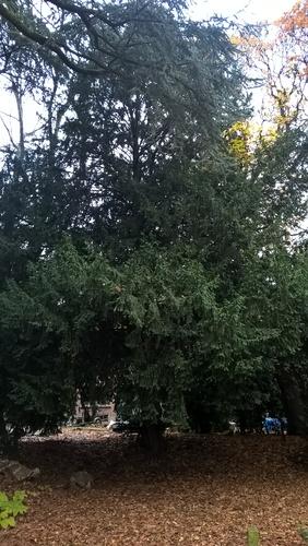 If commun – Anderlecht, Propriété rue de la Laiterie, Rue de la Laiterie, 57 –  20 Novembre 2017