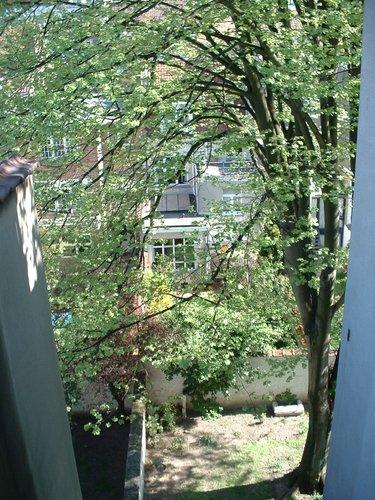 Tilleul argenté – Ixelles, Rue Alfred Giron, 44 –  16 Avril 2003