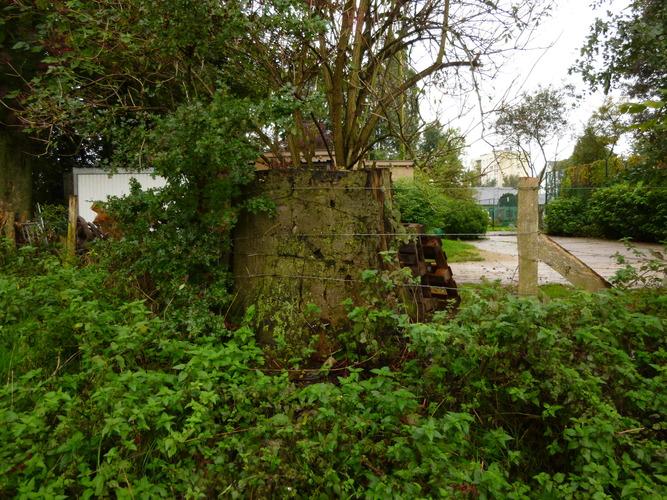 Hêtre d'Europe – Berchem-Sainte-Agathe, Zavelenberg, parc –  17 Octobre 2013