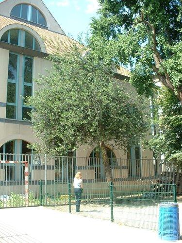 houx – Ixelles, Rue de la Croix, 37 –  26 Juin 2003