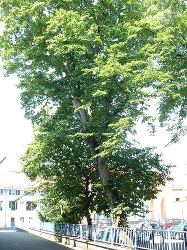 Charme commun – Ixelles, Rue de la Croix, 40 –  26 Juin 2003