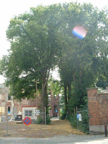 Tilia sp – Ixelles, Jardin de l'œuvre du calvaire, Rue Limauge, 14a-c –  02 Juillet 2003