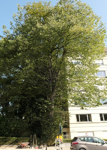 Charme commun – Ixelles, Rue du Buisson –  10 Septembre 2019
