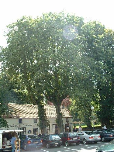 Marronnier commun – Ixelles, Square du Vieux Tilleul, 11? –  31 Juillet 2003