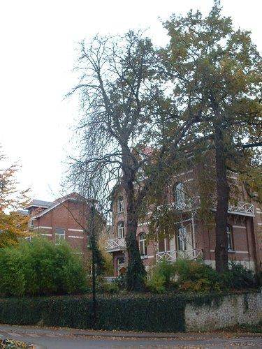 Marronnier commun – Watermael-Boitsfort, Avenue Emile Van Becelaere, 96 –  04 Novembre 2003