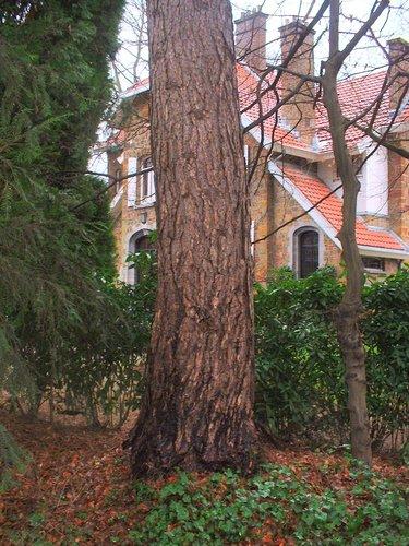 Pin noir – Uccle, Avenue Circulaire, 70 –  09 Janvier 2004