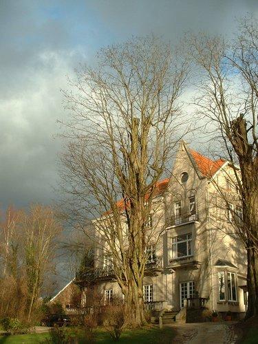 Robinier faux-acacia – Ixelles, Chaussée de Boitsfort, 30-30a –  16 Janvier 2004