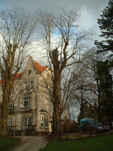 Gewone acacia – Elsene, Bosvoordse Steenweg, 30-30a –  16 Januari 2004