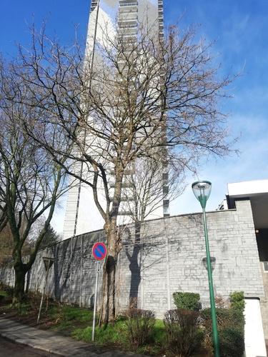 Noisetier de Byzance – Molenbeek-Saint-Jean, Avenue Maurice Van Hemelrijck –  03 Février 2021