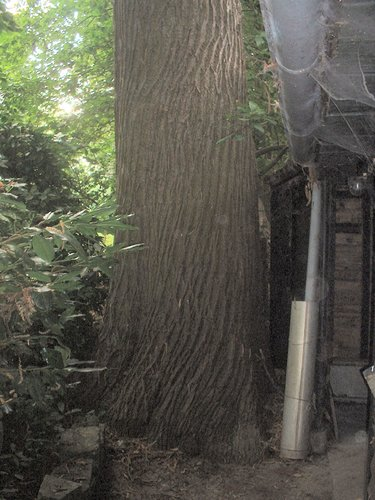 Châtaignier – Auderghem, Avenue Jean Accent, 41 –  05 Août 2004