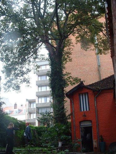 Erable sycomore – Ixelles, Rue des Champs Elysées, 8 –  22 Septembre 2004