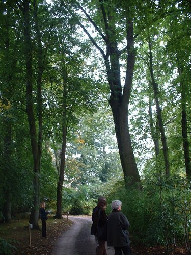 Chêne rouge d'Amérique – Uccle, Propriété Fond'Roy, Avenue du Prince d'Orange, 49-51 –  27 Septembre 2004