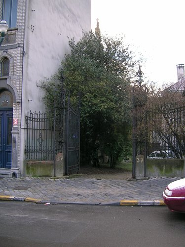 houx – Schaerbeek, Avenue Louis Bertrand, 37 –  24 Janvier 2005