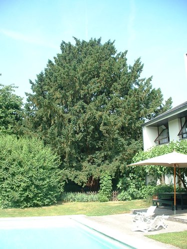 Venijnboom – Brussel, Groene Jagersveld, 71a –  28 Juni 2005