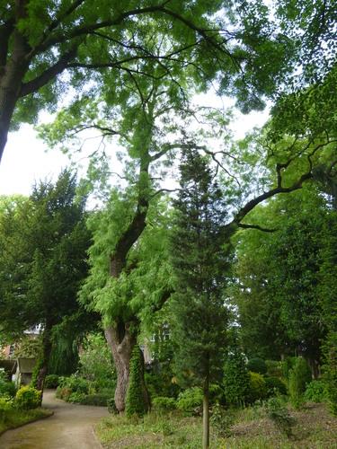 Fr ne feuilles troites jette place de la grotte et for Jardin public pdf