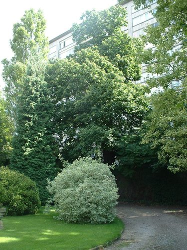 Tamme kastanje – Jette, Gustave Gilsonstraat, 55 –  04 August 2005