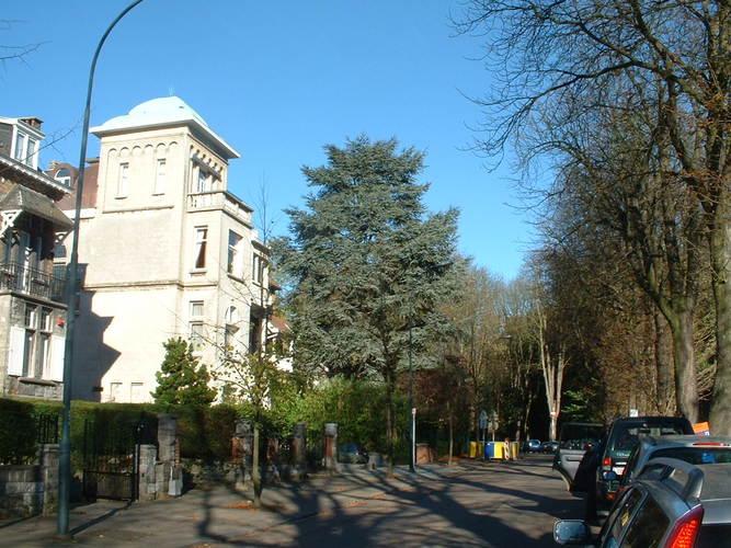 Cèdre bleu de l'Atlas – Auderghem, Avenue du Parc de Woluwe, 64 –  08 Novembre 2005