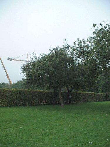 Pommier sauvage – Auderghem, Boulevard des Invalides –  05 Octobre 2005