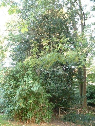 Hulst – Vorst, Kersbeeklaan, 162 –  18 Oktober 2005