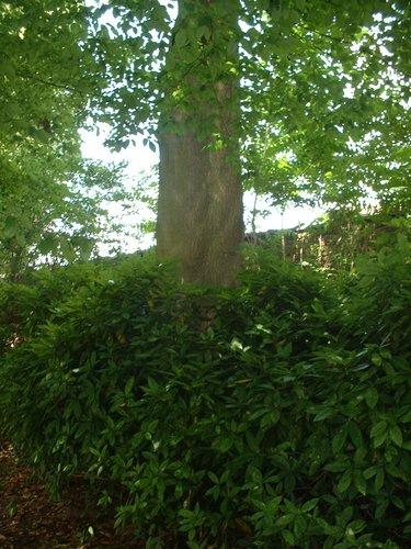 Ailante glanduleux – Forest, Chaussée de Bruxelles, 150 –  23 Juin 2006