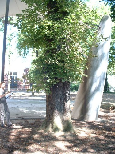 Marronnier commun – Forest, Jardin de l'école normale de Berkendael, Rue Berkendael –  18 Juillet 2006