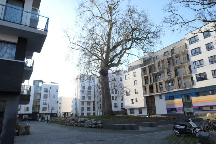 Platane d'Orient – Bruxelles, Rue de Molenbeek, 194 –  16 Janvier 2020