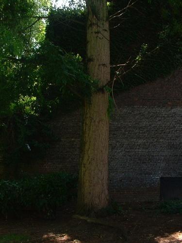 Peuplier du Canada – Anderlecht, Parc Rauter, Rue Victor Rauter –  01 Août 2007