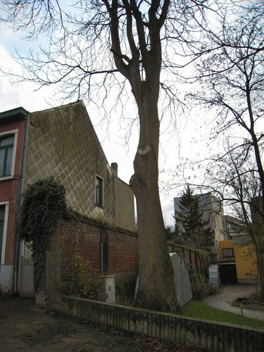 Hemelboom – Ukkel, Groeselenbergstraat, 57 –  23 November 2007