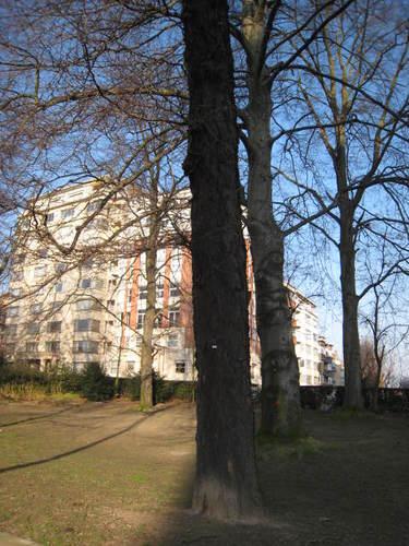Févier d'Amérique – Woluwé-Saint-Lambert, Square Vergote, Square Vergote –  15 Février 2008