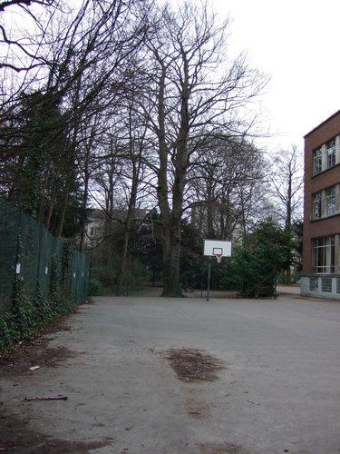 Hêtre d'Europe – Woluwé-Saint-Lambert, Ancienne propriété Lindthout, Avenue des Deux Tilleuls, 2 –  07 Mars 2008