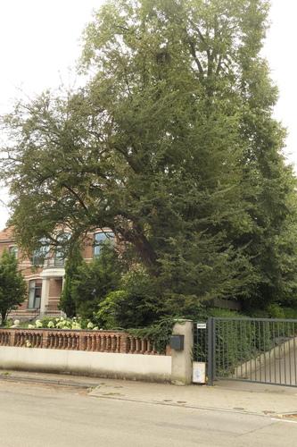Aubépine à un style/ Epine blanche – Anderlecht, Avenue d'Itterbeek, 230 –  12 Août 2021
