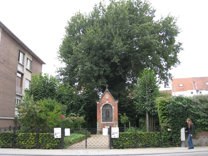 Chêne pédonculé – Anderlecht, Jardin de la chapelle Saint-Guidon, Avenue d'Itterbeek, 93 –  28 Août 2008