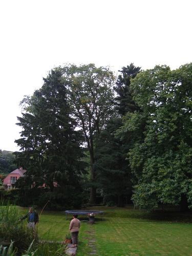 Chêne rouge d'Amérique – Auderghem, Drève du Prieuré, 1 –  23 Septembre 2008