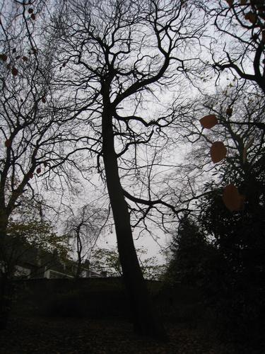 Tamme kastanje – Vorst, de Haveskerckelaan, 78/84 –  19 November 2008