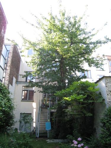Merisier – Saint-Gilles, Rue Fernand Bernier, 25 –  24 Juin 2009