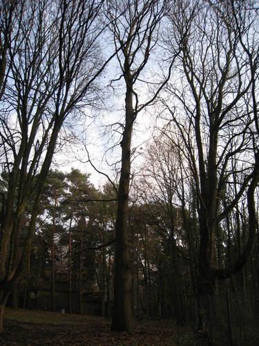 Châtaignier – Woluwé-Saint-Lambert, Moulin de Lindekemaele et abords, Avenue Jean-François Debecker, 38-40 –  01 Décembre 2009