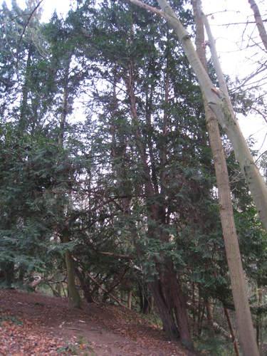 Venijnboom – St.- Lambrechts - Woluwe, Lindekmalemolen en omgevingen, Stadionlaan –  01 December 2009